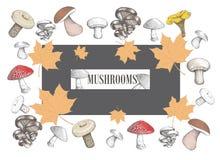 Sketch  Porcini mushroom. Boletus edulis. White fungus. vector i Stock Image