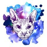 Sketch portrait of bald cat Stock Image
