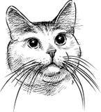A sketch portrait of a domestic cat vector illustration