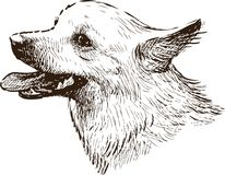 Sketch portrait of a lap dog. Vector drawing of the head of a little dog royalty free illustration