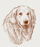Sketch portrait of a retriever royalty free illustration