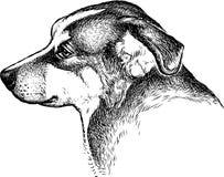 Sketch portrait of a sad dog vector illustration