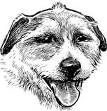 Sketch portrait of a small dog stock illustration