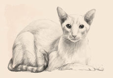Sketch of the purebred cat. Royalty Free Stock Photos