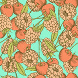 Sketch raspberry and cherry in vintage style Royalty Free Stock Images
