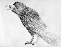 Sketch of raven. Hand drawn pencil sketch of black raven Royalty Free Stock Images