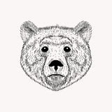Sketch realistic face Bear. Hand drawn Royalty Free Stock Photos