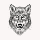 Sketch realistic face Wolf. Hand drawn   illustration Royalty Free Stock Photo
