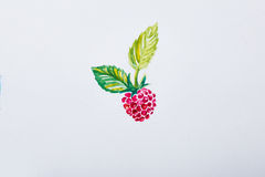 Sketch of a red raspberry on  white background. Stock Photos