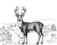 Sketch of reindeer Stock Photo