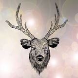 Sketch Reindeer head stock illustration