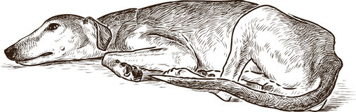 Sketch of a resting greyhound Stock Photo