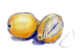 Sketch of ripe lemons. Illustrated sketch of two ripe yellow lemons, one with section removed, isolated on white background Stock Images