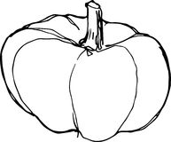 Sketch of ripe pumpkin on white background Royalty Free Stock Photos