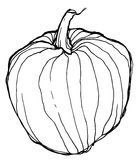 Sketch of ripe pumpkin on white background Royalty Free Stock Images