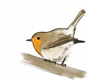 Sketch Robin on branch isolated on white Stock Image