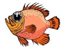 Sketch of rockfish Royalty Free Stock Photo