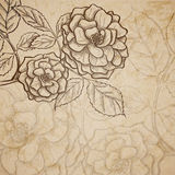 Sketch  rose background Stock Image