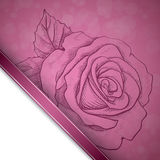 Sketch  rose background Stock Photo