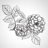 Sketch rose branch Stock Photos