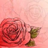 Sketch rose branch Stock Image