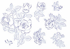 Sketch of roses Stock Images