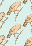 Sketch rufous hornero bird in vintage style Stock Photography
