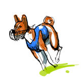 Sketch of running basenji in blue coursing dress Royalty Free Stock Image