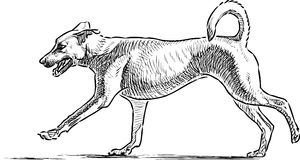 Sketch of a running dog Stock Photography