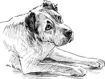 Sketch of a sad dog Stock Image