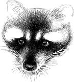 Sketch of a sad raccoon Royalty Free Stock Images
