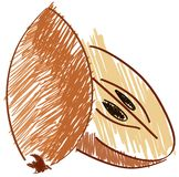 Sketch of a sapodilla isolated illustration Royalty Free Stock Photography
