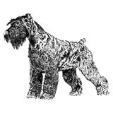 Sketch of Schnauzer dog breed in black and white. Detailed sketch of German Schnauzer dog breed in black and wh Royalty Free Stock Photo
