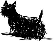 A sketch of a scottish terrier. A vector drawing of silhouette of a lap dog stock illustration