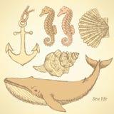 Sketch sea creatures in vintage style Stock Photos
