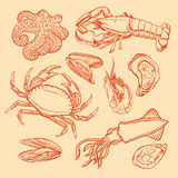 Sketch seafood. Set of marine animals. sketch seafood. squid, crab, octopus, lobster, oysters, mussels and shrimp Royalty Free Stock Photography