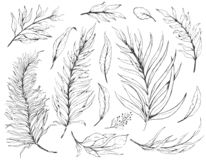 Free Sketch Set Plant Leaves, Drawing Nature Set. Graphic Floral Botanical Line Painted Herb Royalty Free Stock Images - 136138769