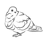 Sketch shape Dove Bird Poultry beast icon cartoon design abstract illustration animal. Sketch shape Dove bird poultry beast abstract animal cartoon design Royalty Free Stock Photos