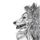 Sketch of Siberian dog Royalty Free Stock Photos