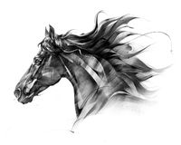 Free Sketch Side Portrait Of A Horse Profile On A White Background Royalty Free Stock Photos - 136187478