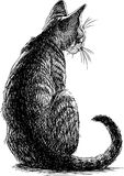 Sketch of a sitting kitten Stock Images