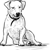 Sketch of a sitting lap dog. A vector drawing of a sitting small dog vector illustration