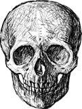 Sketch of skull Stock Image