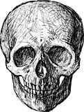Sketch of skull. Vector drawing of a human skull Stock Image