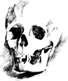 Sketch of the skull Royalty Free Stock Photo
