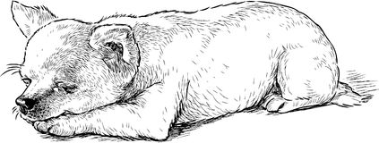 Sketch of a sleeping funny lap dog. Vector drawing of asleep small dog vector illustration