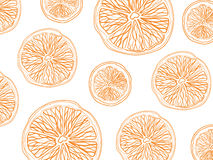 Sketch of sliced citrus fruit on white background rectangular composition Royalty Free Stock Photography
