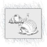 Sketch with snail Royalty Free Stock Photo