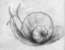 Sketch of a snail. Hand drawn pencil sketch of a snail slowly moving somewhere Stock Photography