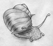 Sketch of a snail. Hand drawn pencil sketch of a snail slowly moving somewhere Royalty Free Stock Photo